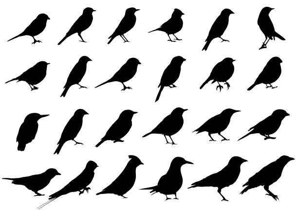 birds silhouettes collection - птица stock illustrations