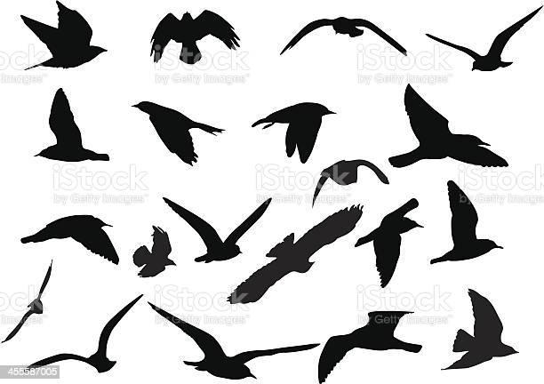 Birds silhouettes vector id455587005?b=1&k=6&m=455587005&s=612x612&h=qo1jstd7qve9e1m3ncwjr7s pjz6dlxv7e4rsxsp2sg=