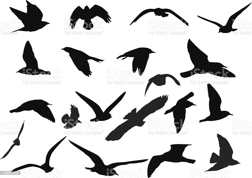Birds Silhouettes vector art illustration