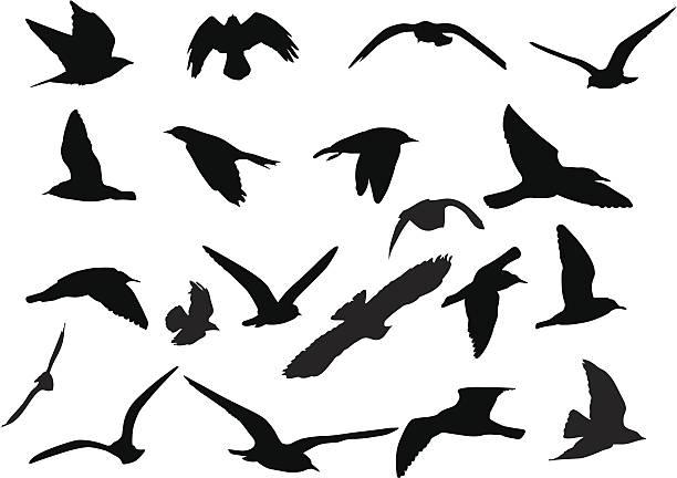 鳥のシルエット - 鳥点のイラスト素材/クリップアート素材/マンガ素材/アイコン素材