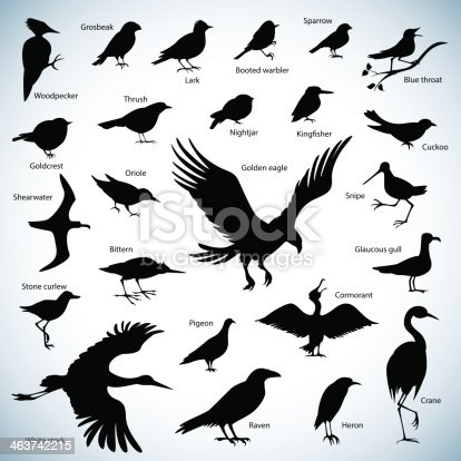 Set of birds silhouettes on abstract background