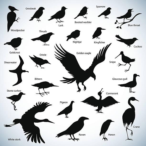 Siluetas de aves - ilustración de arte vectorial