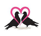 Birds silhoutte. Two birds in love