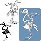 bird's skeleton