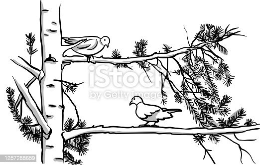 istock Birds Two Of A Kind 1257288659