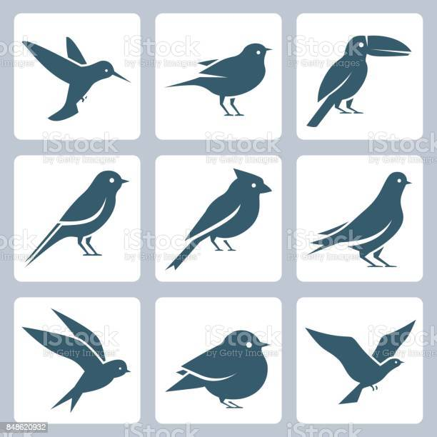 Birds vector icon set vector id848620932?b=1&k=6&m=848620932&s=612x612&h=zfkb5qm27cr1z2mkpdlhkvyf5u2evjarfvtzkeh2f8o=