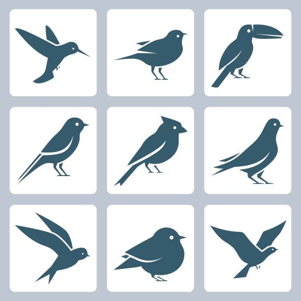 birds vector icon set - birds stock illustrations
