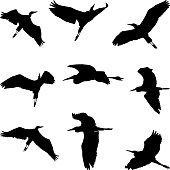 flying birds, set of heron silhouettes