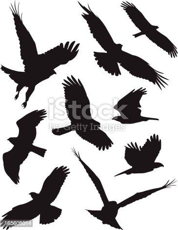 ferocious birds