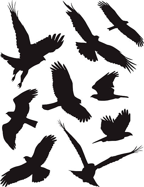 Birds ferocious birds flapping wings stock illustrations
