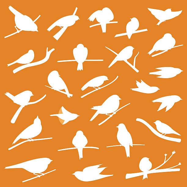 Birds vector art illustration