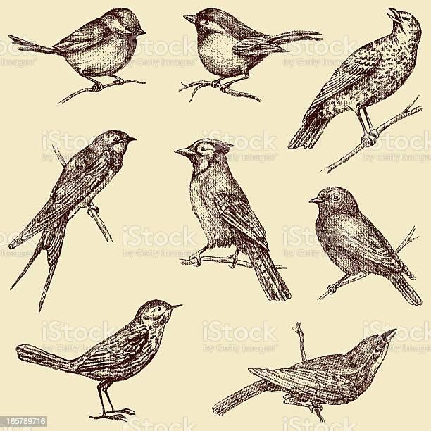 Birds vector id165789716?b=1&k=6&m=165789716&s=612x612&h=zilopxf7l82xnvhhlmxgu1vqh vpusk1vxjz3fpuqz4=