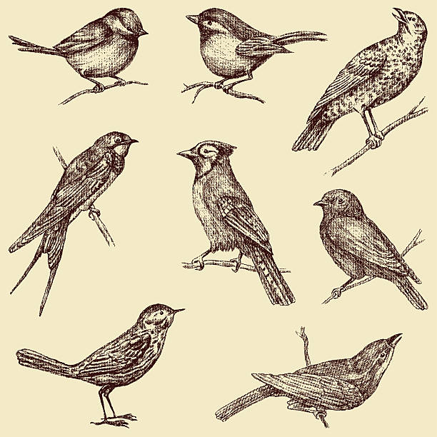 birds The vector drawings of a different wild birds. bird drawings stock illustrations