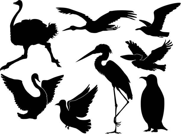 birds set of silhouettes of different birds heron stock illustrations