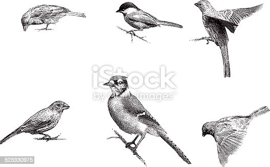 Mezzotint illustrations of Blue Jay, Chickadee, Sparrow, Purple Finch.