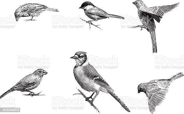 Birds vector id525330975?b=1&k=6&m=525330975&s=612x612&h=yujlrbavzchbnzlen2iciesimcz8zdvead5mqewvjns=