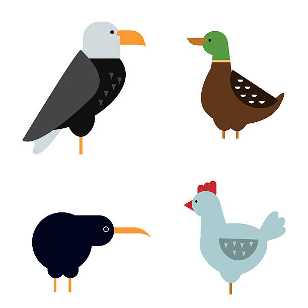birds vector set illustration isolated - eagle character stock illustrations, clip art, cartoons, & icons