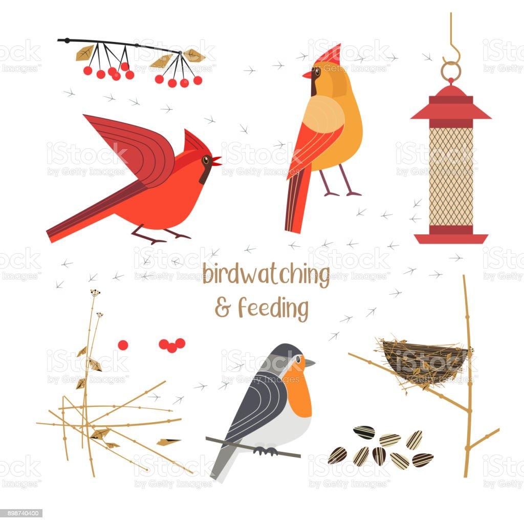 Birdwatching and feeding vector art illustration