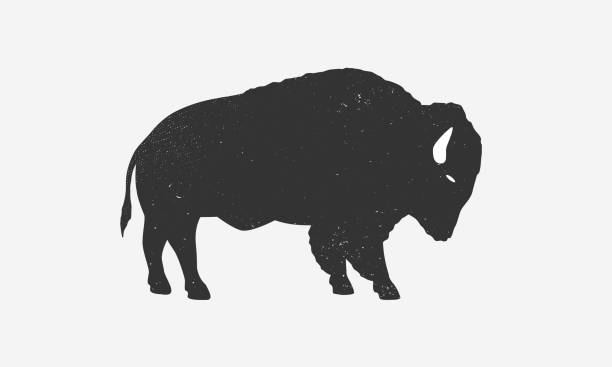 Bison icon silhouette with grunge texture. Buffalo silhouette isolated on white background. Vector illustration Vector illustration animal captivity building stock illustrations