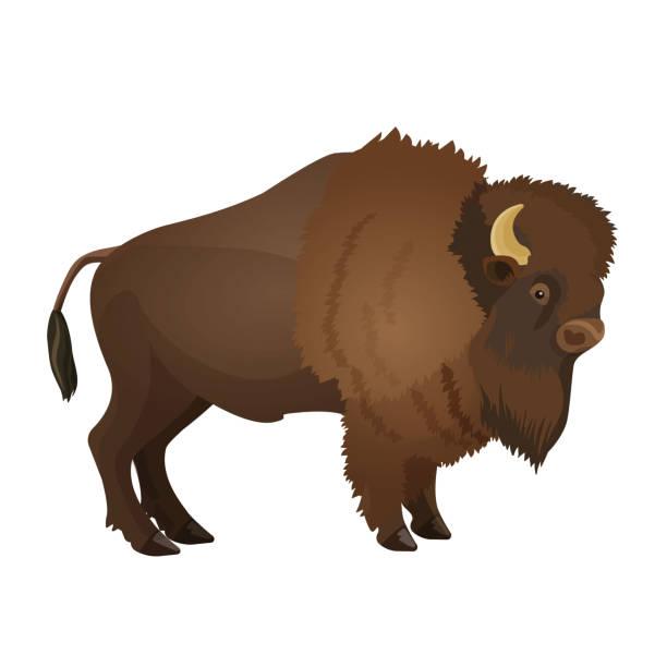 Bison large even-toed ungulate realistic vector illustration i vector art illustration