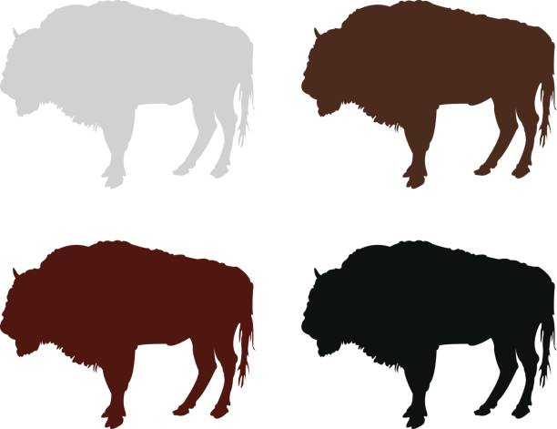 Bison silhouette vector illustration of bison silhouette american bison stock illustrations
