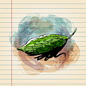 istock Bitter Gourd Drawing on Ruled Paper 1218898856