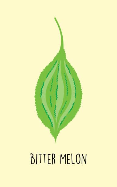 Bitter Melone Vektor – Vektorgrafik