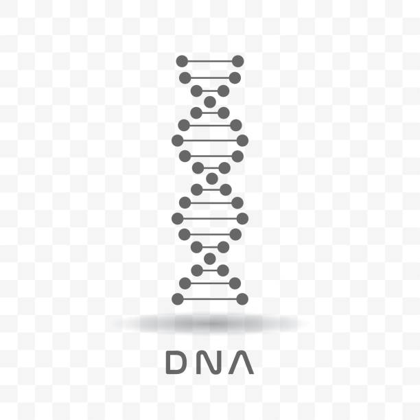 Black abstract DNA Black abstract DNA strand symbol with shadow isolated on transparent background. dna test stock illustrations