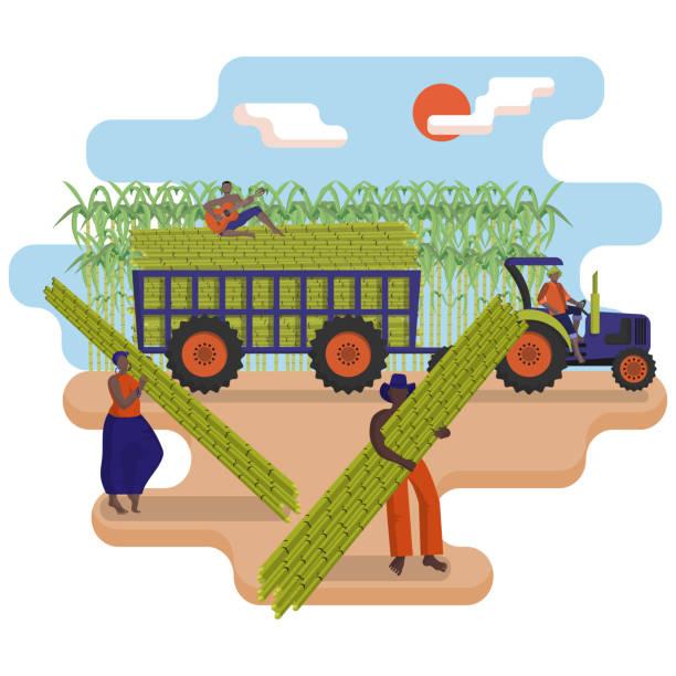 illustrazioni stock, clip art, cartoni animati e icone di tendenza di black agricultural workers are picking a sugarcane in the field. tractor with a trailer loaded with sugarcane. - illustrazioni di canna da zucchero