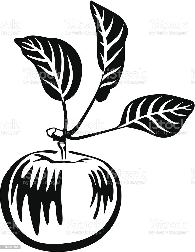 Black and white apple royalty-free stock vector art
