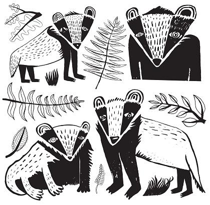 Black and white badger