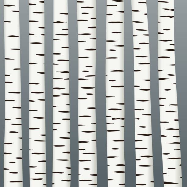 black and white birch tree texture on dark background vector design - wood texture stock illustrations
