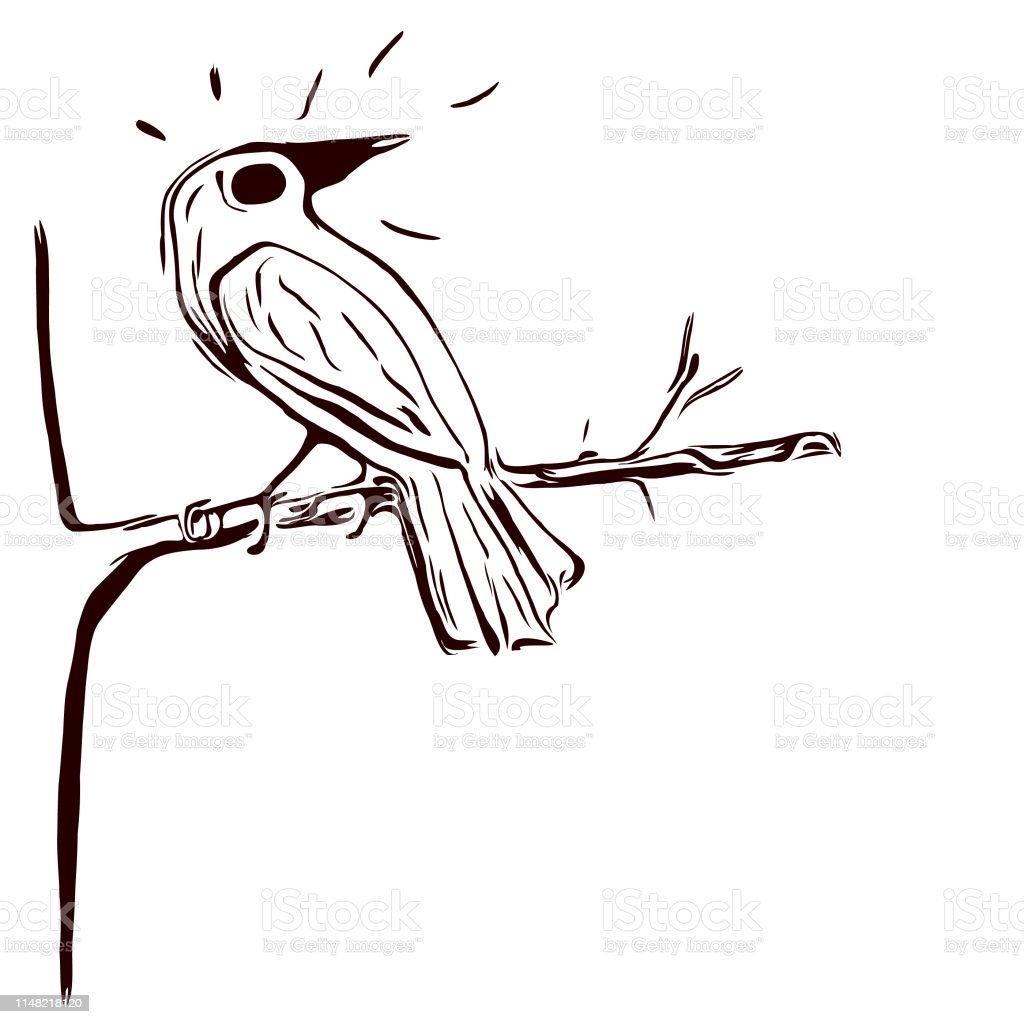 Oiseau Noir Et Blanc Sur Un Dessin De Crayon Darbre Vecteurs