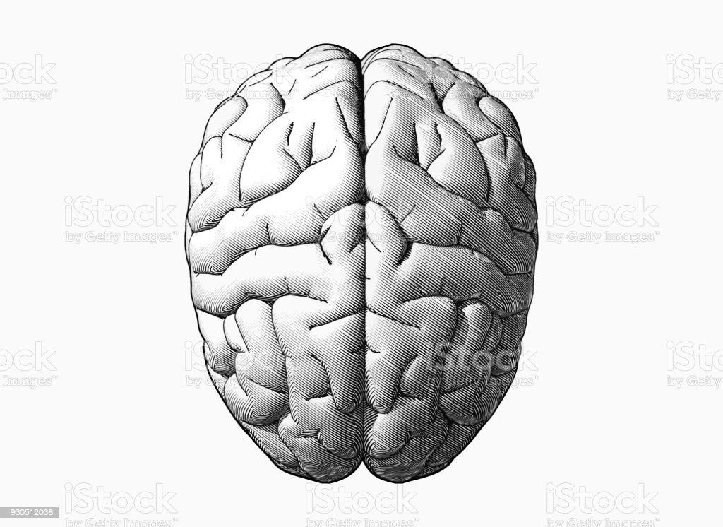 Black and white brain drawing illustration - illustrazione arte vettoriale