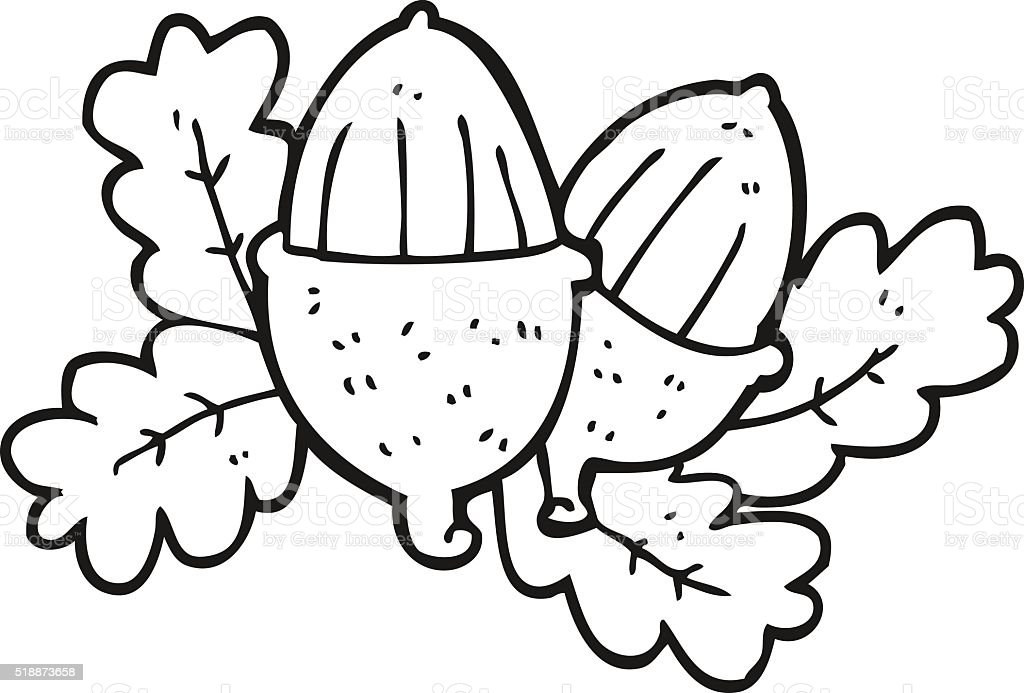 Black And White Cartoon Acorns Stock Illustration ...