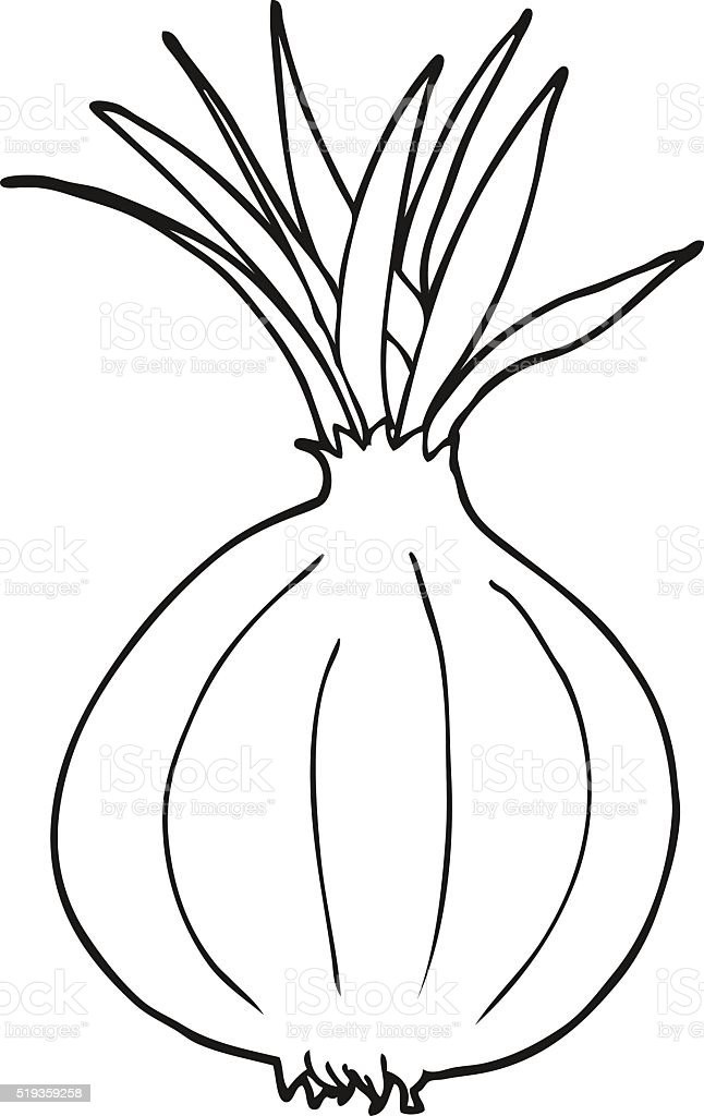 Black And White Cartoon Onion Stock Vector Art & More ...