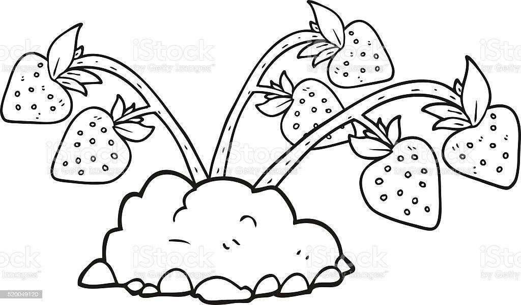 Schwarz Und Weiss Cartoon Erdbeeren Stock Vektor Art Und Mehr Bilder