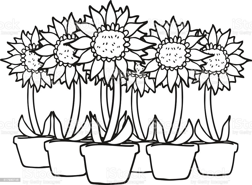 Black And White Cartoon Sunflowers Stock Vector Art More Images Of