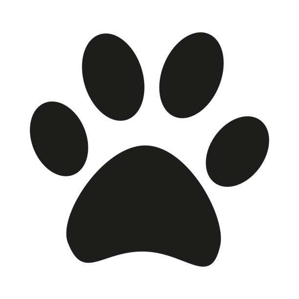 black and white cat paw footprint silhouette - jaguar stock illustrations
