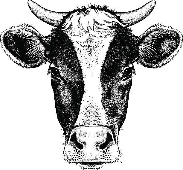 Royalty Free Cow Clip Art, Vector Images & Illustrations ...