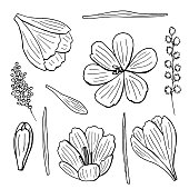 Monochrome set of beautiful isolated botanical vector lineart illustrations. The collection of black outline hand drawn flowers, leaves and herbs on white background. Lovely crocuses and mimosa art