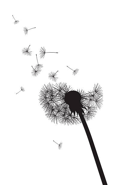 black and white dandelion with flying seeds black and white dandelion with flying seeds, vector illustration grief stock illustrations