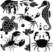 Vector design elements featuring sea creatures and plants: hermit crab, crab, seahorse, sea turtle, lobster.