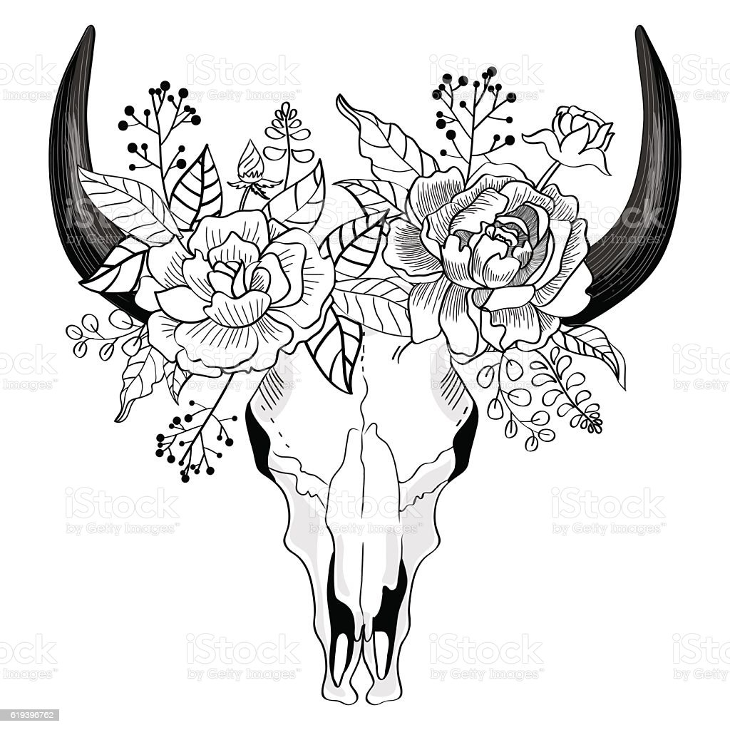 Black and white drawing of a bison skull vector art illustration