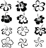 Black and white drawings of tropical flowers