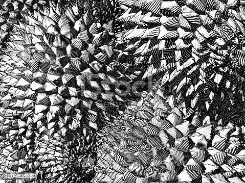 Monochrome engraving drawing durian the king of fruit background pattern illustration with the contrast of  light and shadow