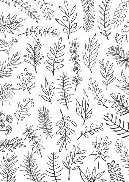black and white floral hand drawn farmhouse style outlined twigs branches  background - лекарственная трава stock illustrations