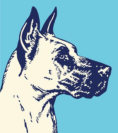 Black and White Great Dane Profile