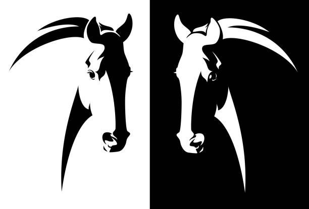 ilustraciones, imágenes clip art, dibujos animados e iconos de stock de vector de cabeza de caballo blanco y negro - caballo