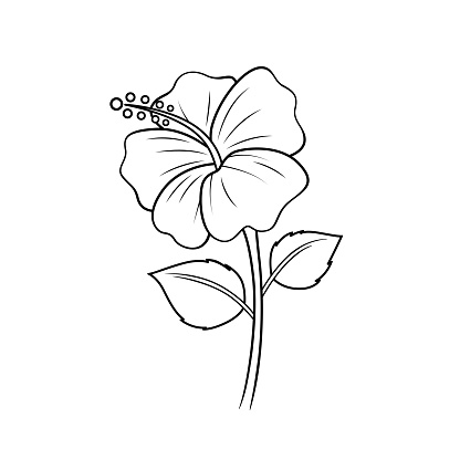 Black and White Illustration of red flowers seen in the countryside Can be used as teaching material for teachers to make children's books. Or have parents use to make documents Accompany the lesson.